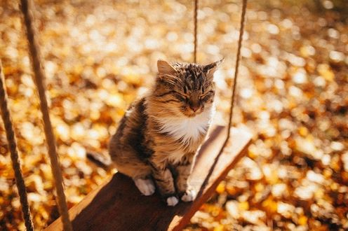 Фото Полосатый кот сидит на качелях в парке