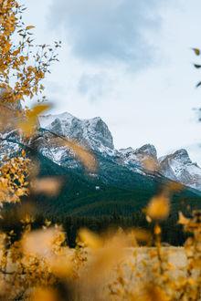 Фото Вид на горы сквозь осеннюю листву. Фотограф Nick Verbelchuk