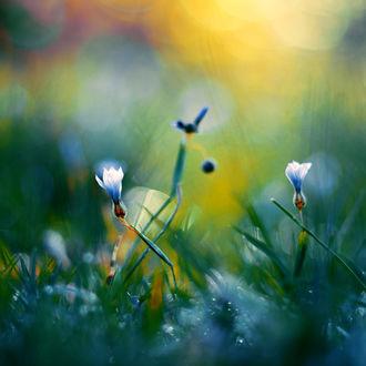 Фото Цветы на размытом фоне с боке, фотограф John Peter