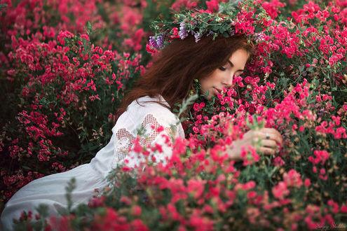 Фото Модель Алена лежит в полевых цветах, фотограф Sergey Shatskov