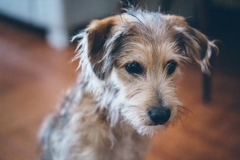 Фото Симпатичный грустный пес