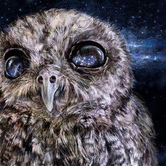 Фото В глазах совы отражается космос