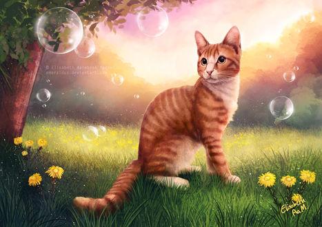 Фото Рыжий кот смотрит на мыльные пузыри, by Emeraldus
