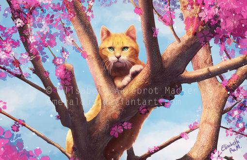 Фото Рыжий кот лежит на цветущем дереве, by Emeraldus