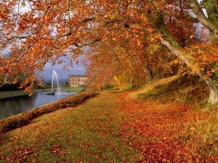 Фото Золотая осень в парке