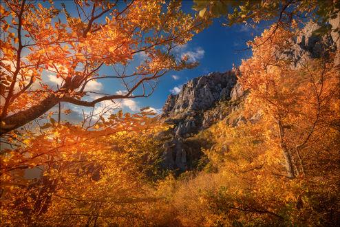 Фото Золотая осень в Крыму, Южной Демерджи. Фотограф Влад Соколовский