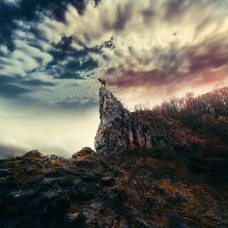 Фото Олень стоит на вершине скалы, фотограф Ionut Caras