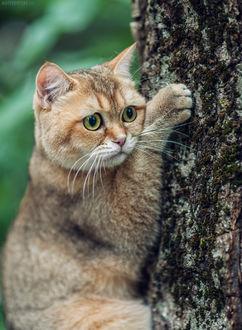 Фото Кот залез на дерево. Фотограф Матвеев Стас