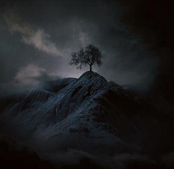 Фото Одинокое дерево на горе, by Baxia Art