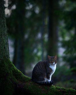 Фото Кот сидит на корне дерева в лесу