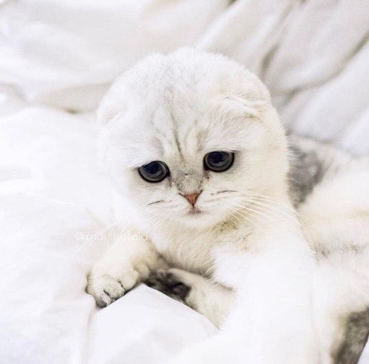 Фото Вислоухий котик с грустными глазами
