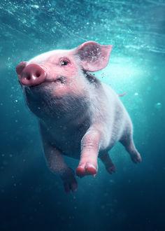 Фото Поросенок плывет под водой, by Oyvind Fiksdal