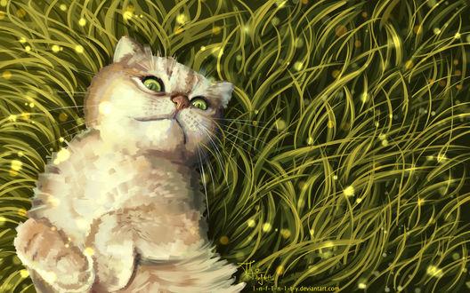 Фото Кошка лежит в траве, by 1-N-F-1-N-1-T-Y