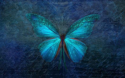 Фото Голубая бабочка на темно-голубом фоне