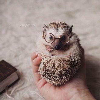 Фото Ежик в очках лежит на ладони, by Masha_Littlefox