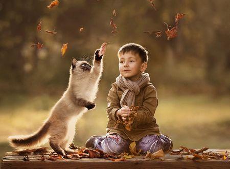 Фото Мальчик и сиамский котенок играют с осенней листвой на лавочке в парке, фотограф Елена Шумилова