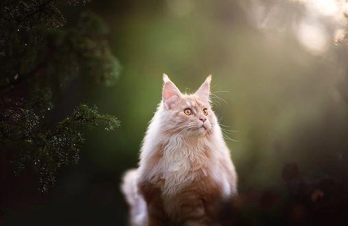 Фото Кошка сидит у хвойного дерева