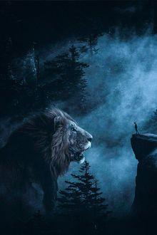 Фото Мужчина, на вершине скалы и огромный лев смотрят друг на друга