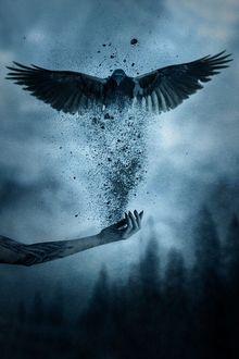Фото Над рукой с татуировкой появляется ворон