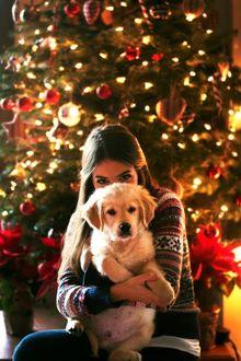 Фото Девушка обнимает собаку породы золотистый ретривер на фоне наряженной елки