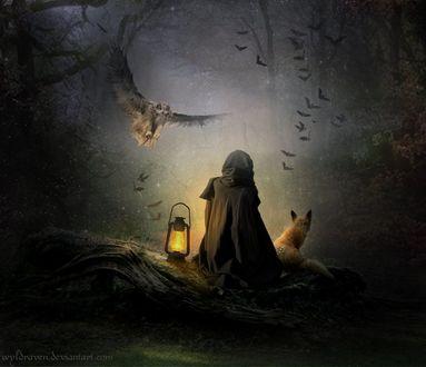 Фото Девушка в плаще, рядом с лисой и фонарем сидят в ночи, в туманном лесу, by wyldraven