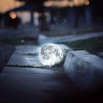 Фото Луна лежит возле бордюра