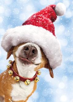 Фото Собака в ошейнике с бубенчиками и в новогодней шапке под падающим снегом
