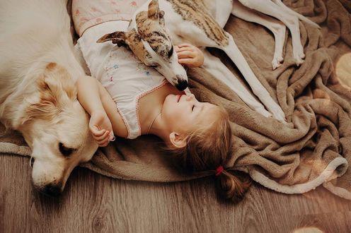 Фото Девочка лежит на полу рядом с собаками породы золотистый ретривер и борзой, by Mira Clesoul