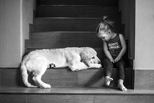 Фото Девочка сидит на ступеньках рядом с собакой породы золотистый ретривер, by Mira Clesoul