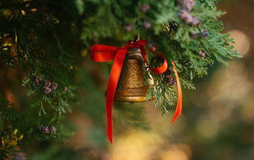 Фото Колокольчик с красным бантиком висит на хвойном дереве