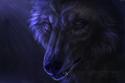 Фото Морда волка крупным планом, by Lunegrimm