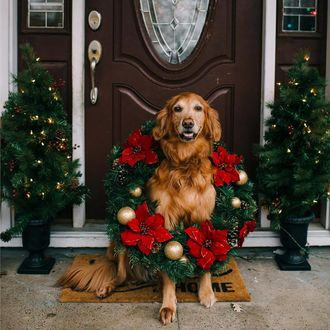 Фото Собака в новогоднем венке сидит на крыльце дома