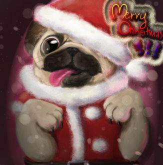 Фото Мопсик в костюме Санта-Клауса высунул язык (Merry Christmas / Веселого Рождества)