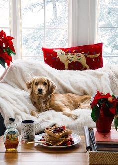 Фото Золотистый ретривер на диване перед столом с чашкой и тарелкой с десертом, бутылкой с напитком