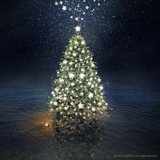 Фото Новогодняя елка и рядом с ней горящий фонарь, by Evenliu PhotoArt