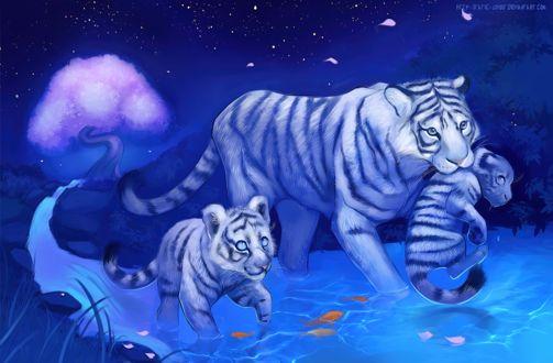 Фото Тигрица переносит в пасти тигренка, через воду с золотыми рыбка в ней идя рядом с другим тигренком, by Static-ghost
