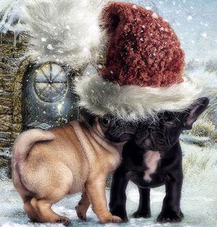 Фото Мопсы в новогоднем колпаке, by Cindy Grundsten