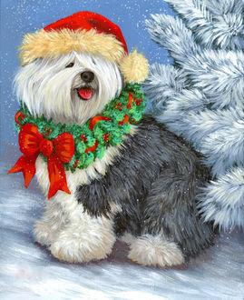Фото Новогодняя собачка породы бобтейл в праздничном колпаке и на шее венок из хвои с красным бантом сидит возле елки