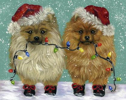 Фото Две шпица в новогодних шапочках и ботинках держат в пасти гирлянду из разноцветных фонариков