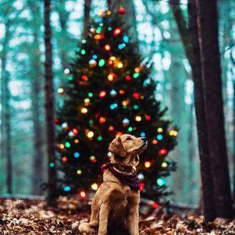 Фото Золотистый ретривер сидит на фоне новогодней елки