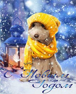 Фото Щенок в шапке и шарфе сидит на снегу у фонаря (С Новым годом)