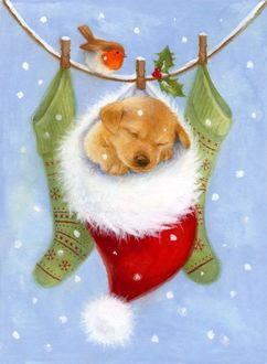 Фото Щенок спит в шапке Санта-Клауса, которая висит на веревке с носками под падающим снегом