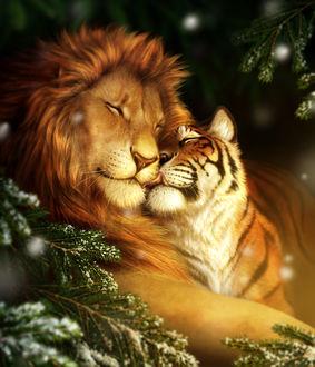 Фото Лев и тигрица у еловой ветке в снегу, by jocarra