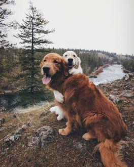 Фото Два пса, один из которых в очках, позируют на фоне осенней природы