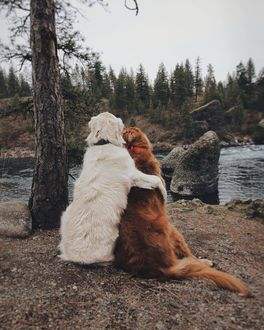 Фото Два пса сидят обнявшись на берегу реки