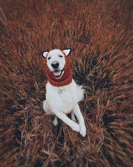Фото Белый пес в вязанном капоре