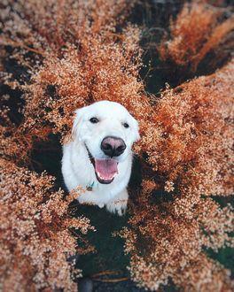 Фото Счастливый пес сидит среди сухой растительности