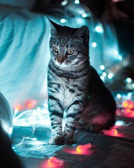 Фото Полосатый котик со смешным выражением на мордочке, освещаемый огоньками гирлянды