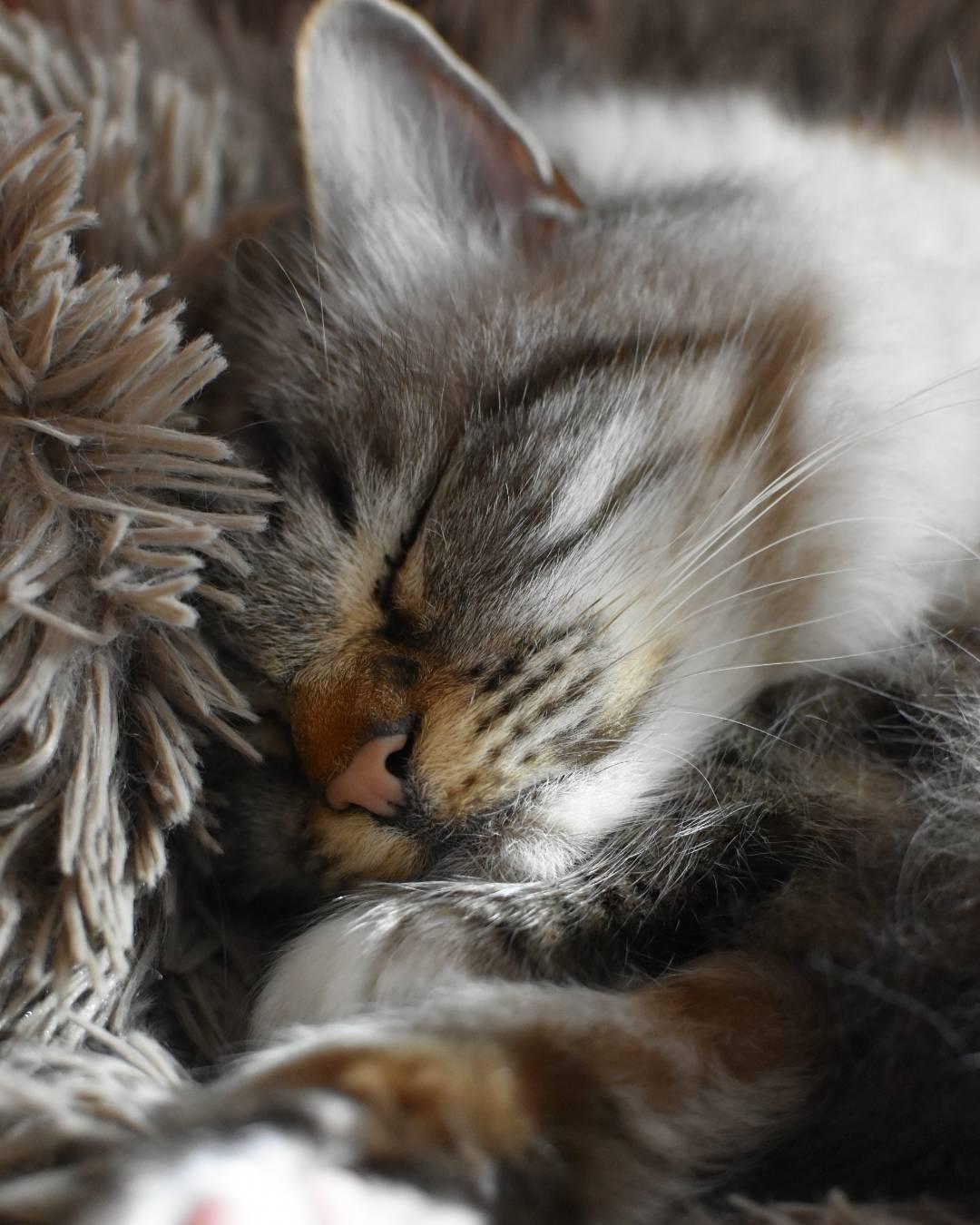 фото спящих котенка чокер это изысканный