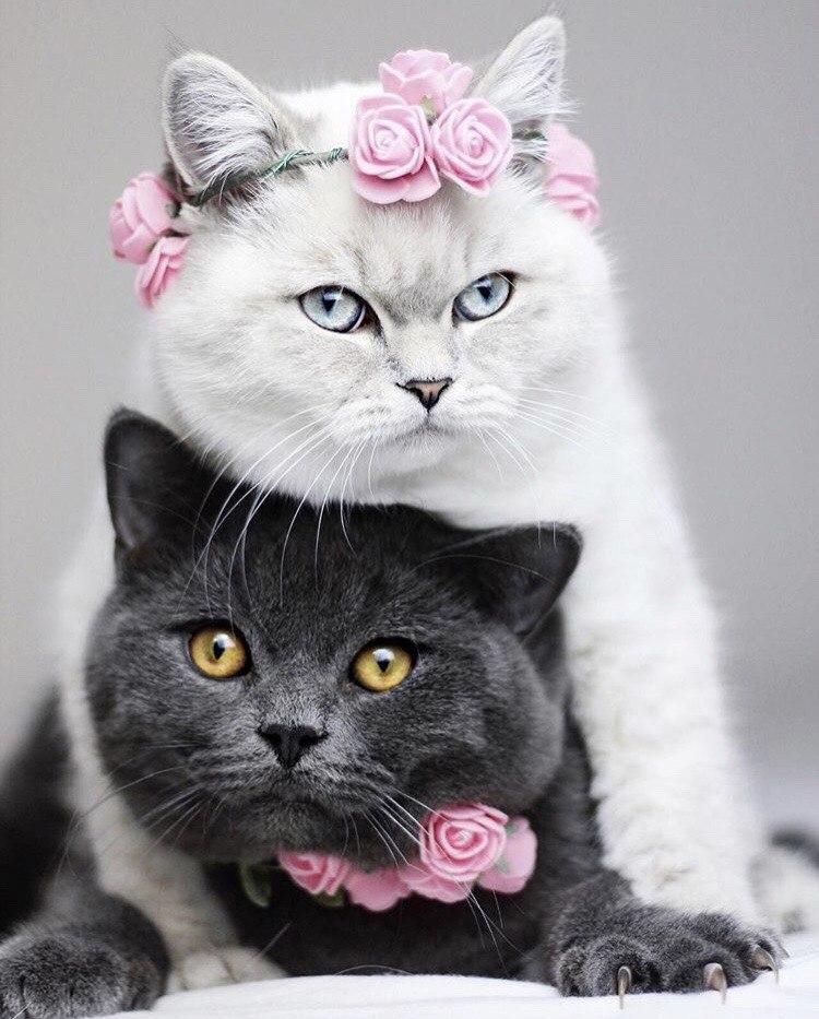 Можно картинки кошки